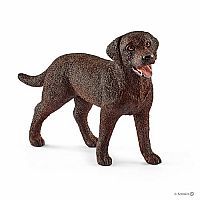 Female Labrador Retriever