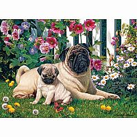 Pug Family - 1000 Pieces